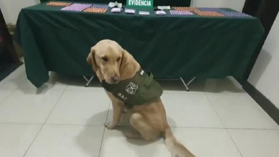 Perro detecta droga avaluada en más de 45 millones de pesos durante un control sanitario