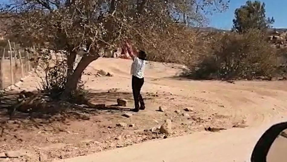 Alumnos sin Internet ya pueden estudiar: Directora recoge sus mochilas desde un árbol y les deja tareas