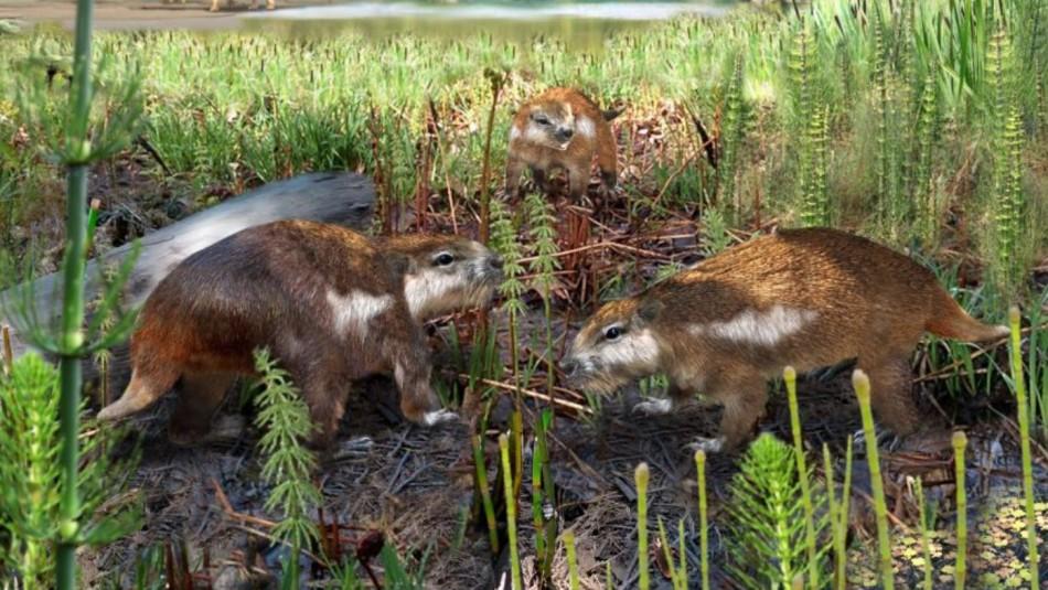 Descubren restos de un mamífero que vivió hace 74 millones de años en la Patagonia chilena
