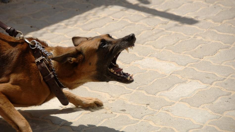 Joven saltó un muro para robar una propiedad y murió por furioso ataque de perros guardianes
