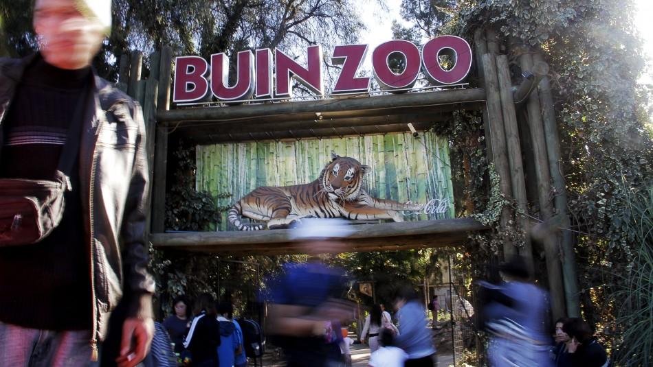 Buin Zoo sufre por la pandemia de coronavirus: Recinto lleva más de 100 días cerrado al público