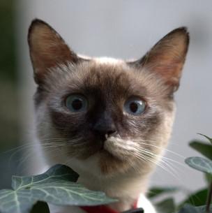 Un gato sobrevivió tras pasar 12 minutos dentro de una lavadora en marcha en Australia