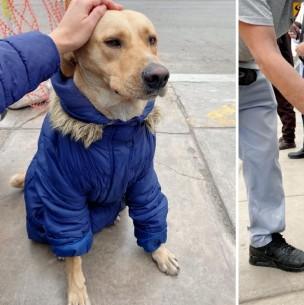 Amigo fiel: Perro espera en la puerta del hospital a su dueño internado por coronavirus en Perú