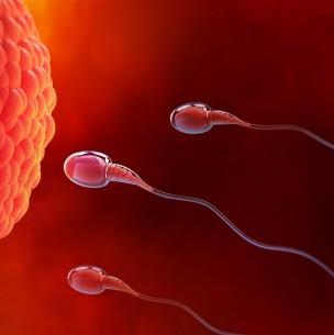 ¿Se puede fabricar esperma?