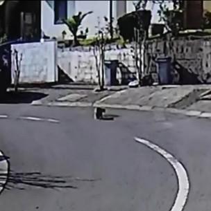 Puma fue visto en La Florida: Se trataría de un cachorro