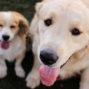 Generaba malestar intestinal y vómitos en mascotas: Colmevet investigará alimento retirado del mercado