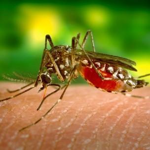 Alerta en Argentina por casos de dengue: El mayor registro histórico en el país