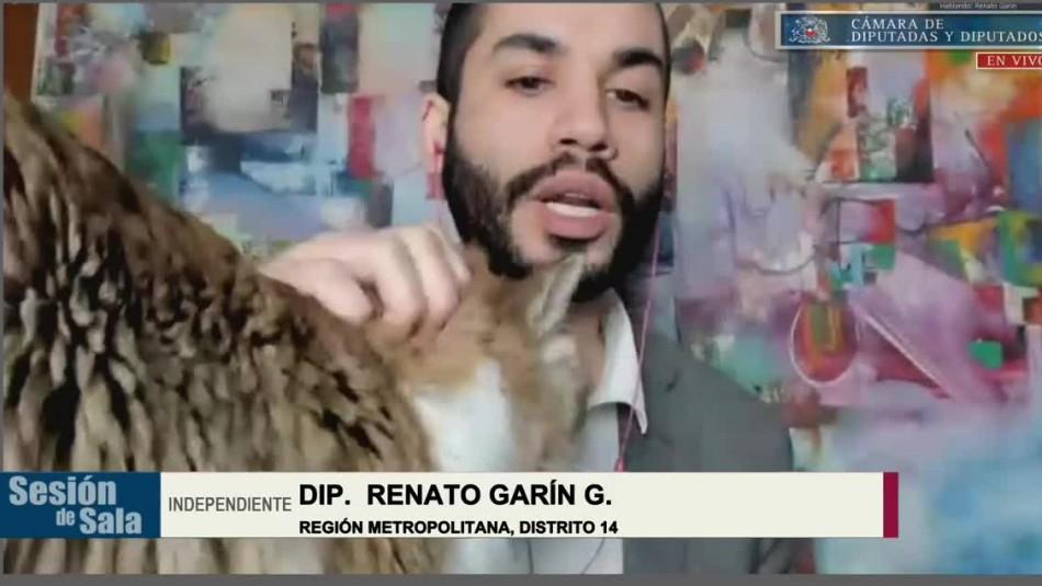 El momento en que el gato del diputado Garín se cruzó en la cámara durante discusión de veto
