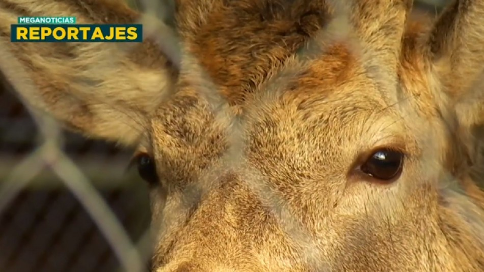 Rescate Zoo: La crisis que ronda a los zoológicos