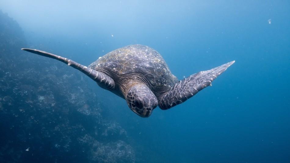 Casi 300 barcos chinos arrasan con tiburones, mantarrayas, tortugas y