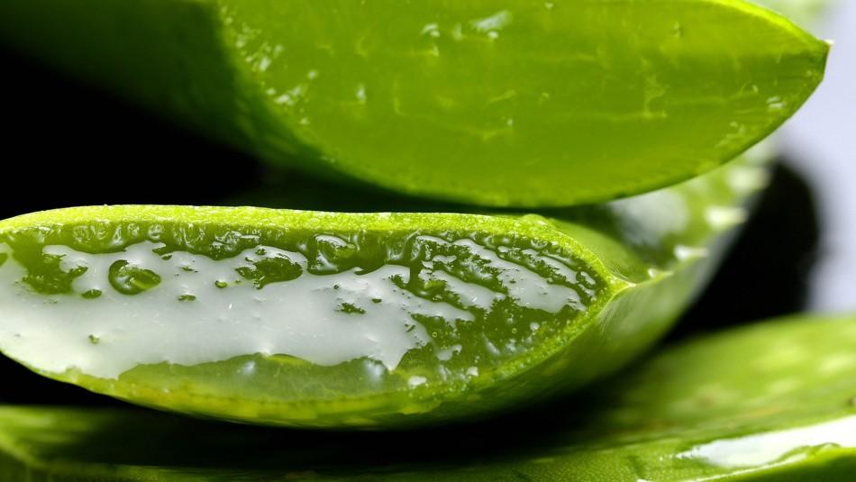 Planta curativa: Estos son los beneficios que aporta el Aloe Vera al organismo