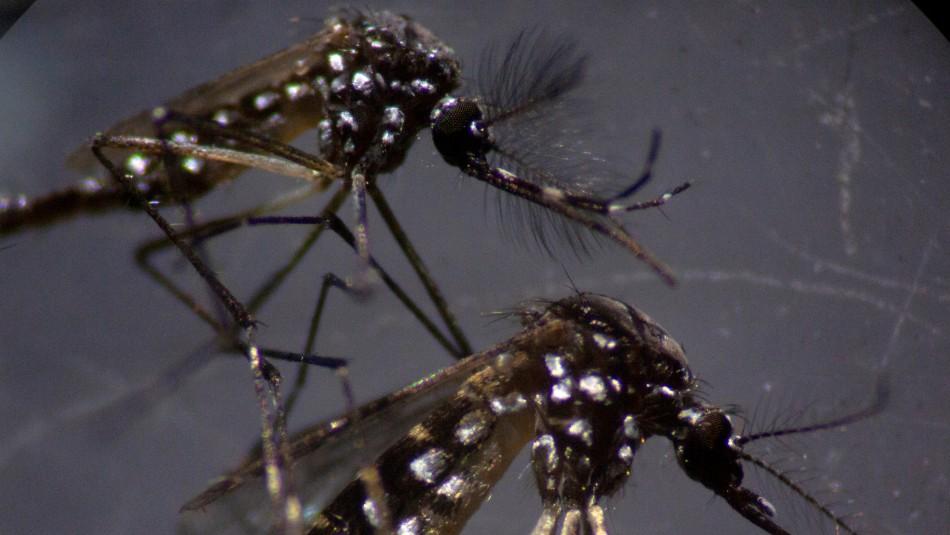 OPS advierte: Coronavirus aumenta el riesgo de muerte por enfermedades transmitidas por mosquitos