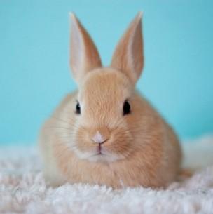 Colombia es el primer país sudamericano en prohibir pruebas de cosméticos en animales