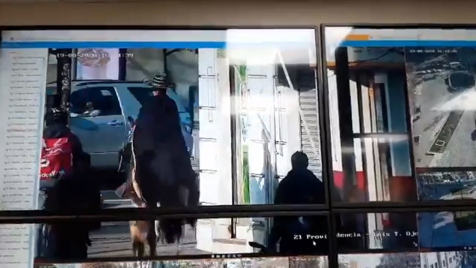Matthei muestra video de sujeto cabalgando en Providencia: