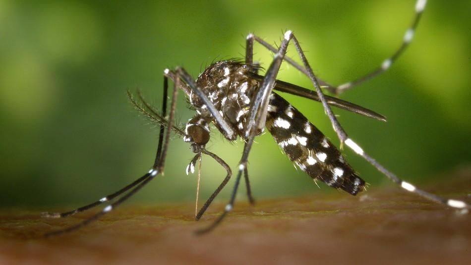Aumenta riesgo por Malaria debido al coronavirus: ¿Cómo se contagia y cuáles son los síntomas?