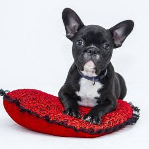 ¿Los perros sueñan?: Mira lo que dice un investigador de la Universidad de Columbia