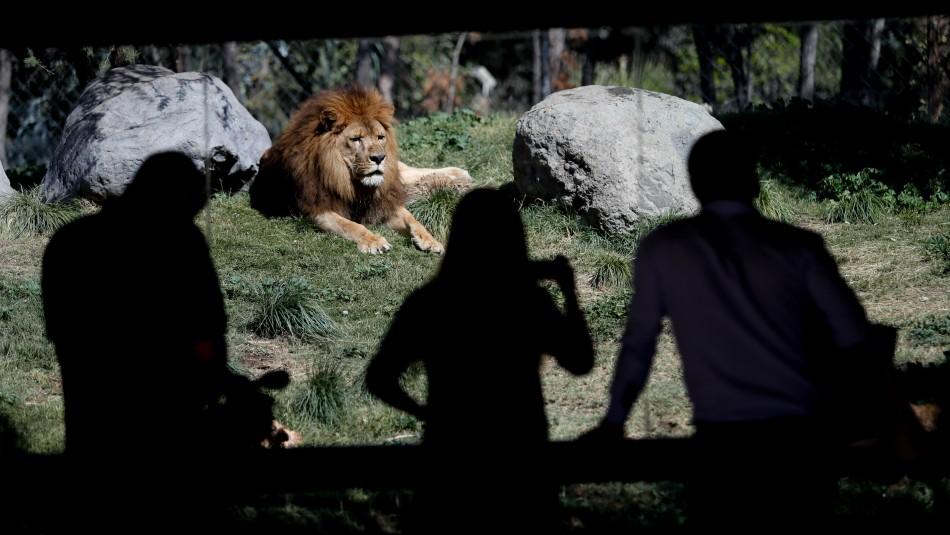 Zoológico Nacional reabrirá sus puertas este mes bajo nuevas medidas sanitarias
