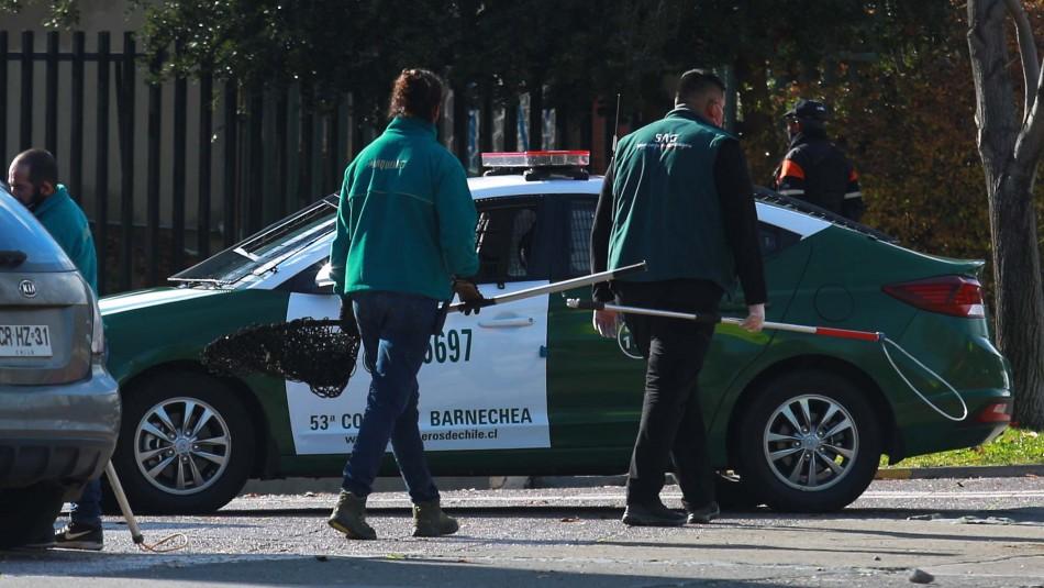 Investigan muerte de puma en sector precordillerano: No descartan participación de terceros