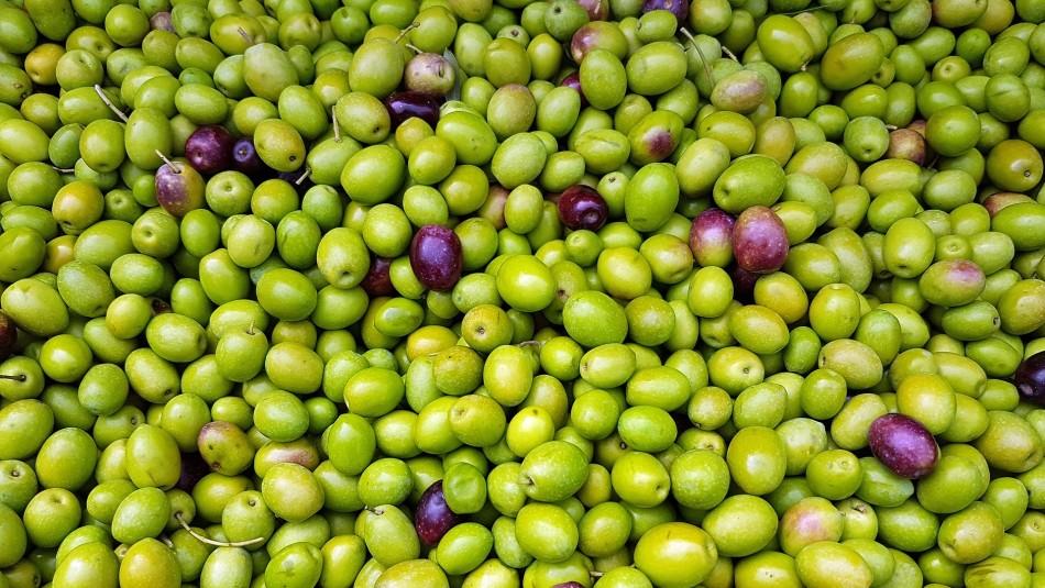 Un fruto que destaca por su versatilidad: Conoce los beneficios de las aceitunas