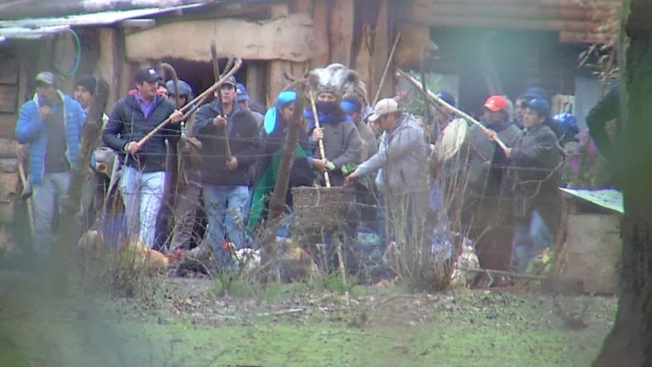 Machi Celestino Córdova realiza ceremonia espiritual mapuche en su rewe