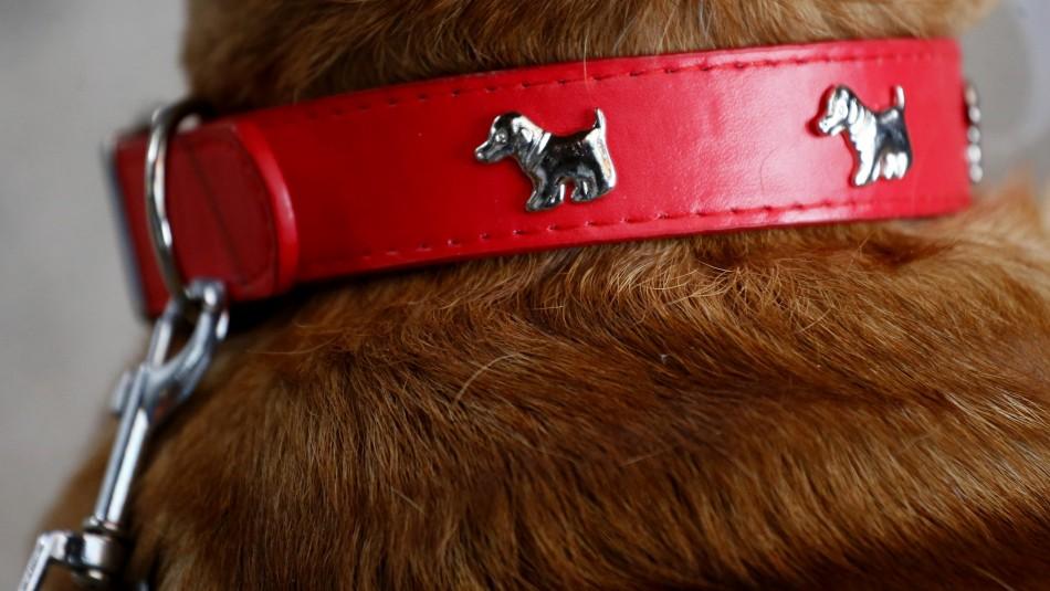 Fiestas Patrias: Veterinario da consejos sobre comidas que pueden ser dañinas para las mascotas