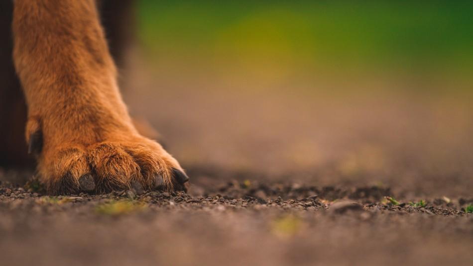 Hombre habría adoptado a más de 11 perritos para dárselos de comer a sus víboras