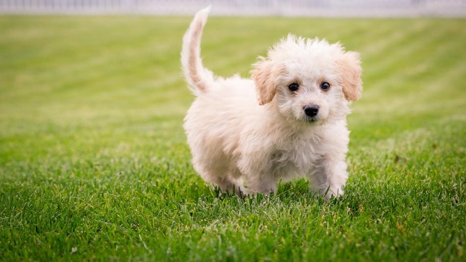 ¿Cómo mantener alejadas a las pulgas y garrapatas de tu mascota?