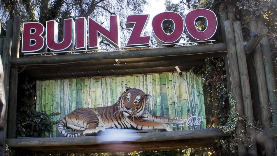 Buin Zoo vuelve a abrir sus puertas después de más de seis meses: