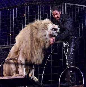 Francia va a prohibir los animales salvajes en los circos ambulantes