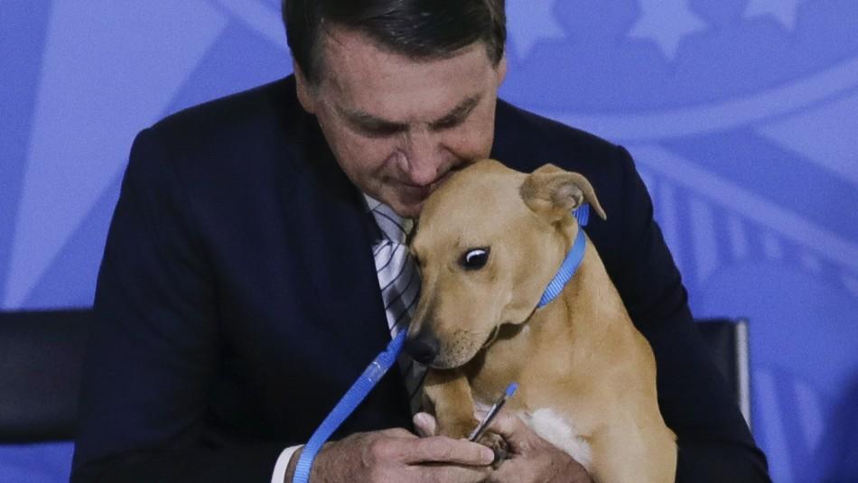 Bolsonaro promulga Ley contra maltrato animal y hace que su perro firme la nueva legislación