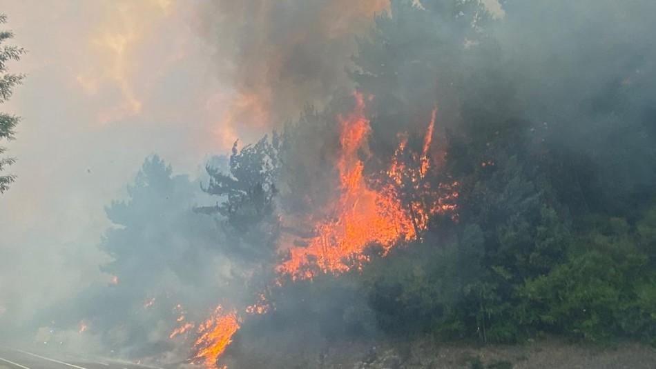 Onemi declara Alerta Roja para la comuna de Zapallar por incendio forestal