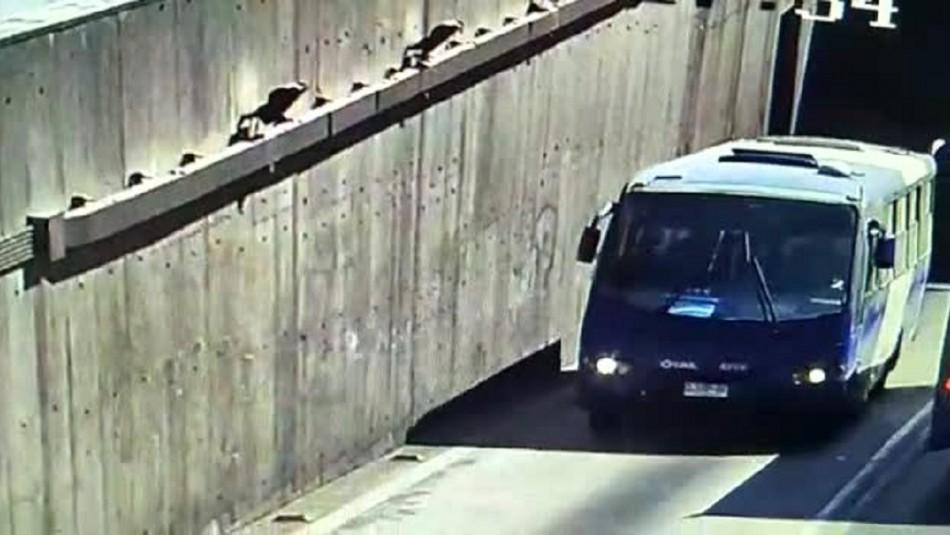 Conductor del Transantiago va al baño y le roban el bus con pasajeros adentro