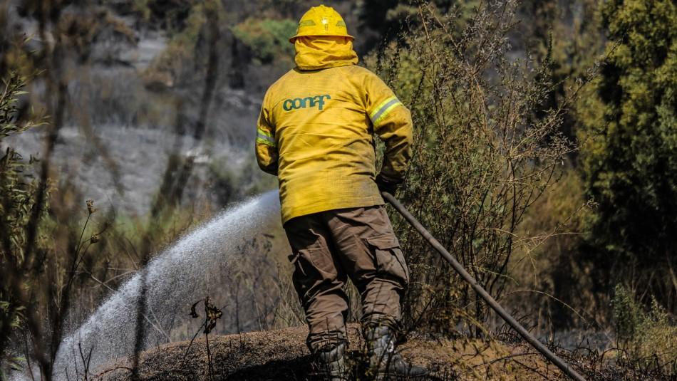 Alerta Roja en Zapallar y Papudo por incendio forestal que consume pastizal y arbolado nativo