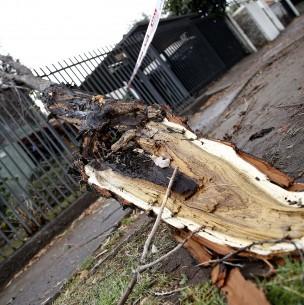 Familia de mujer que murió por caída de rama exige mantención de árboles en La Reina