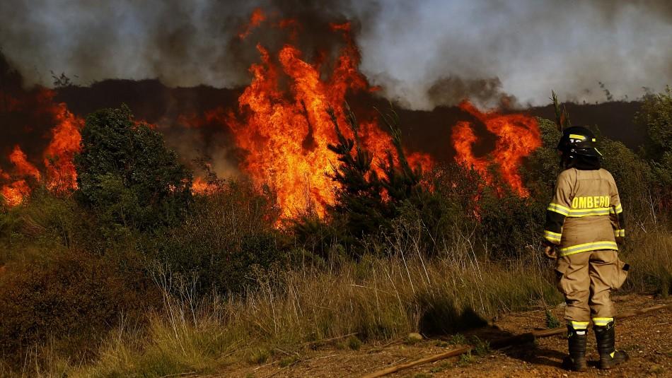 Rayos provocan incendio forestal y Alerta Roja en reserva nacional Malalcahuello