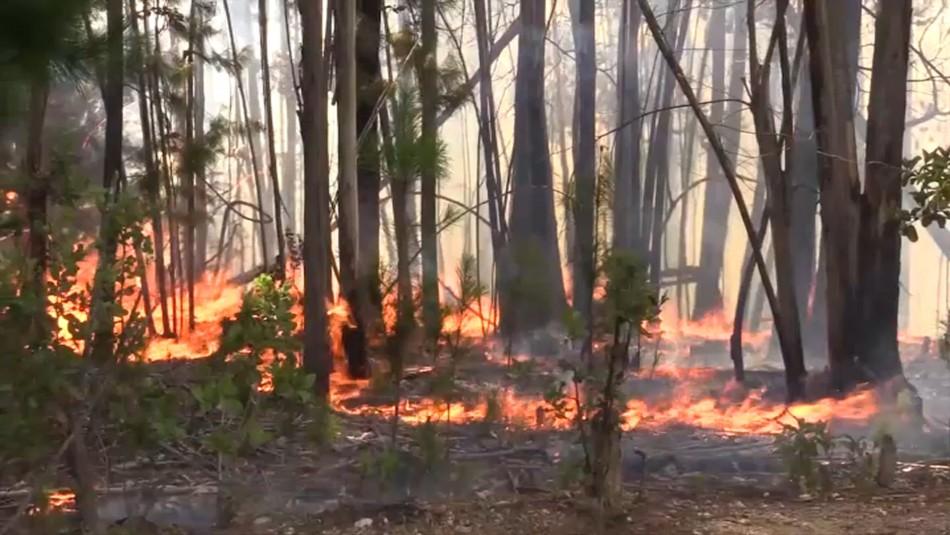 Familiares de brigadistas fallecidos en incendios forestales de 2017 siguen sin ser indemnizados