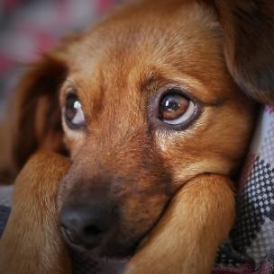 Acusado de atacar sexualmente a perra en Copiapó queda con firma quincenal