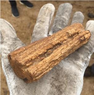 Halla troncos fósiles que serían del año 15 mil AC mientras limpiaba el patio de la parcela