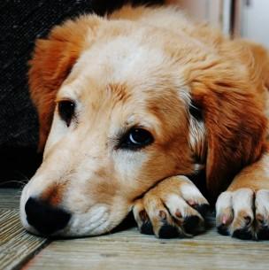 Dueño de criadero ilegal de perros le cortó las cuerdas vocales a 34 caninos en España
