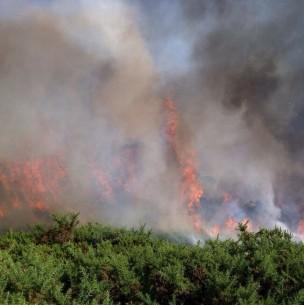 Incendios forestales: Alerta roja para comuna de Olmué y Los Ángeles