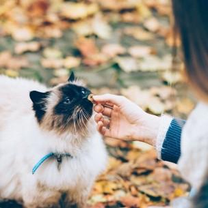 Conoce los alimentos y otras sustancias mortales para los gatos