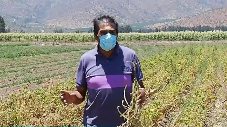 Crisis hídrica: Agricultores sufren pérdida total de su producción en Curacaví y María Pinto