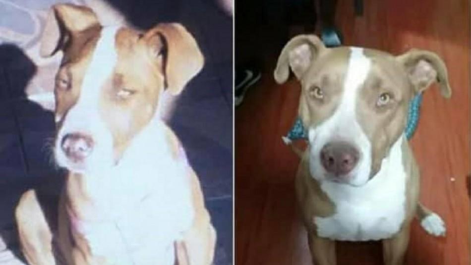 Denuncian que mujer apuñaló y mató a perrita de su vecina en Los Andes