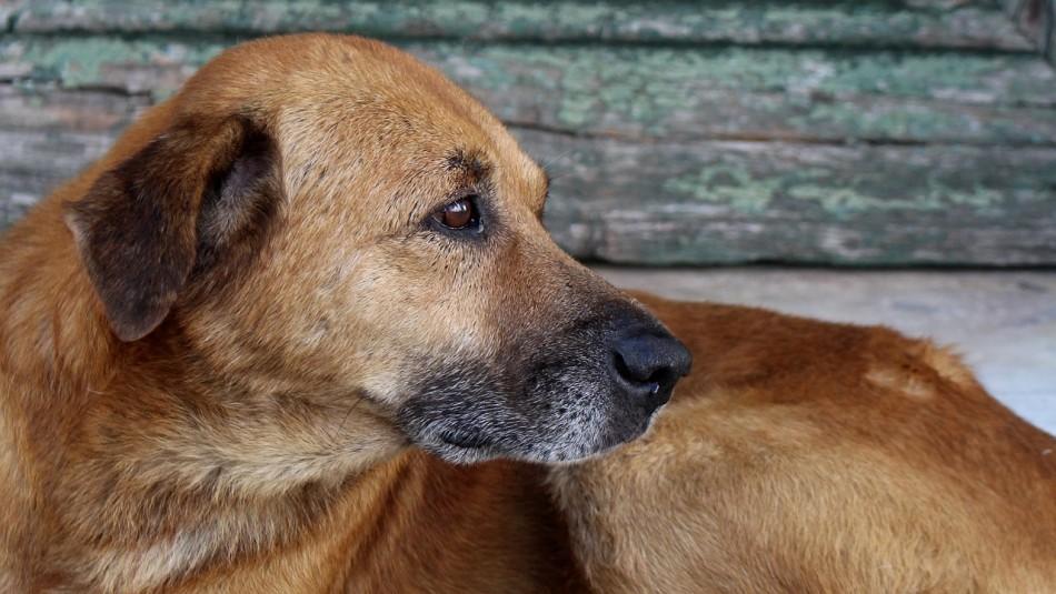 Aumenta el abandono de animales durante la pandemia: Autoridades llaman a denunciar