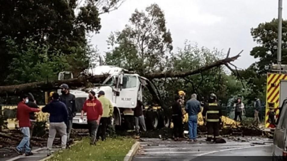 Conductor muere aplastado por árbol en Lautaro.