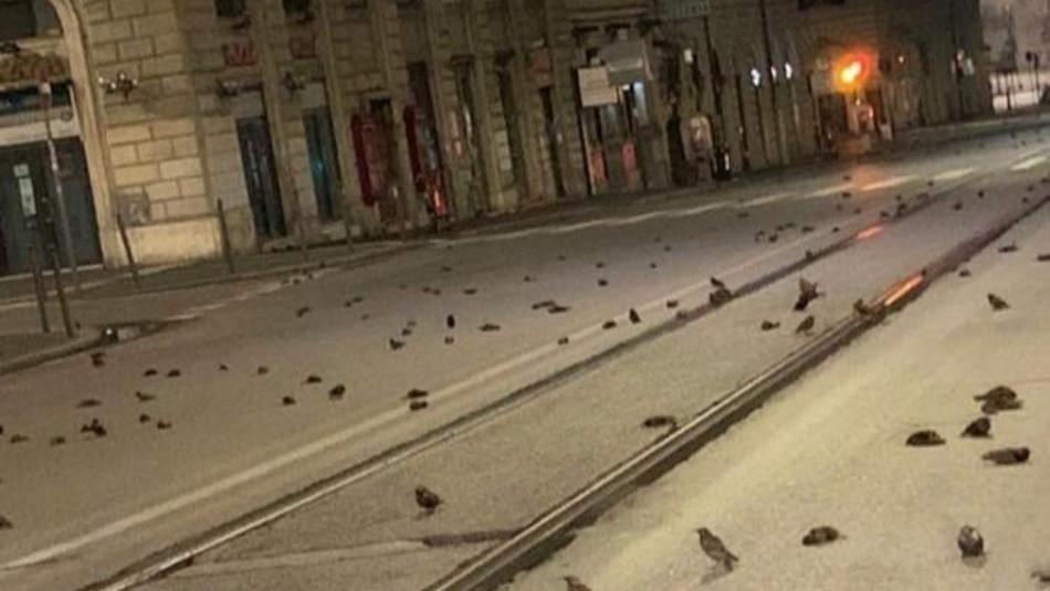Cientos de aves mueren en Roma tras los fuegos artificiales de Año Nuevo