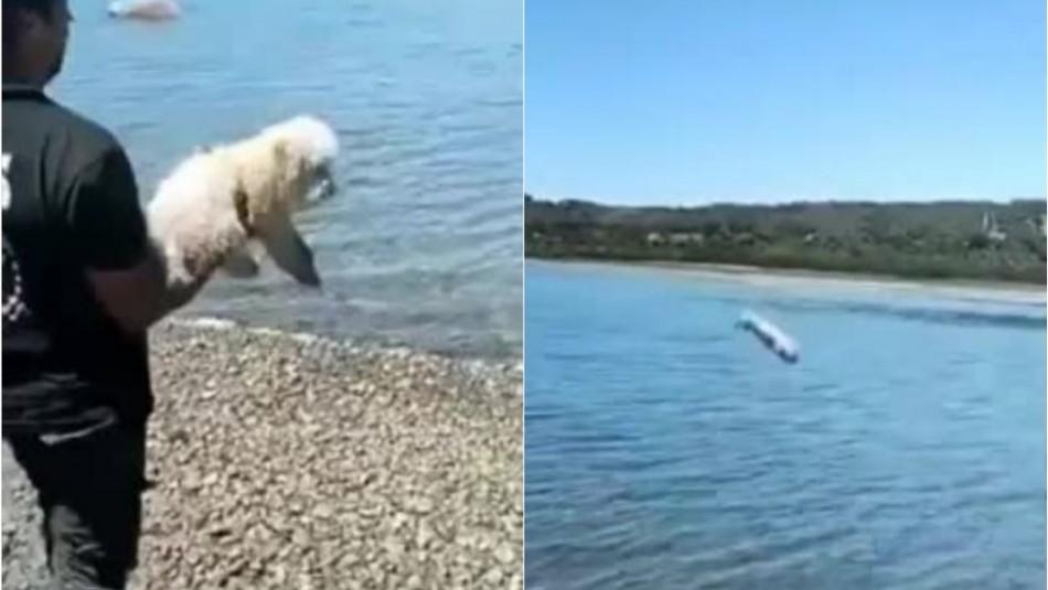 Video muestra a hombre arrojando violentamente a un perro al mar de Chiloé
