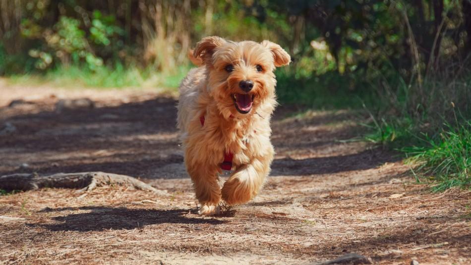 ¿Tu perro rasca el suelo después de hacer sus necesidades? Conoce la razón de esta conducta