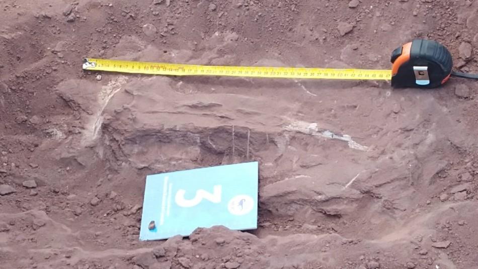 Hallan restos de dinosaurio herbívoro que habitó en Sudamérica hace 140 millones de años