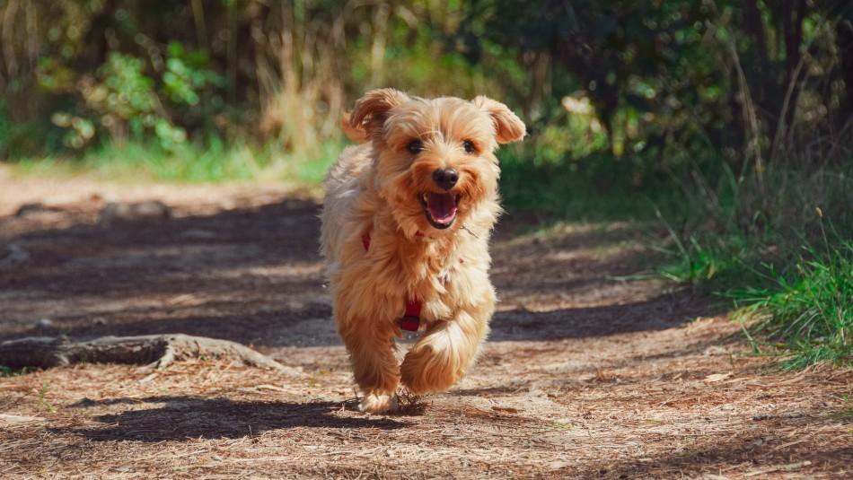 Más que una señal de estar alegre: ¿Por qué los perros mueven la cola?